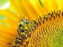 Včelaři si pochvalují krmivo apivital sirup díky jeho špičkové k valitě, více než srovnatelné s kvalitními zahraničními produkty a přesto velice příznivé ceně.